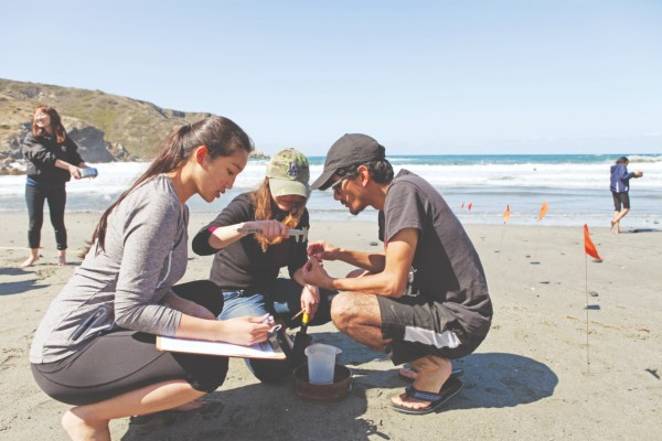 Students study at the beach.